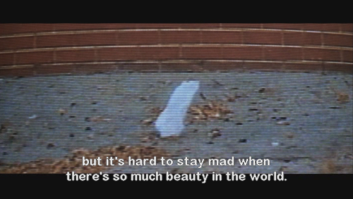 American Beauty quotes