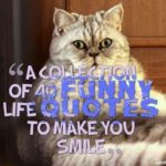 A collection of 40 funny life quotes to make you smile